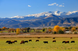 Cattle ranch near Boulder, Colorado Image